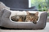 Cute Cat Resting On Pet Bed At Home poster