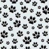 stock photo of dog footprint  - Dog - JPG