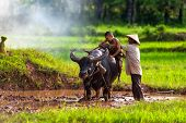Dad And Son This Is Lifestyle Of Family Farmer At Rural Asia. Traditional Life Of Famer In Countrysi poster