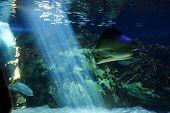 Marine Aquatic Life poster