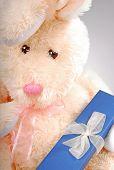 Bunny Holding gift Box