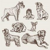 Set dogs hand drawn
