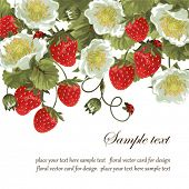 stock photo of strawberry plant  - Card with a strawberry and ladybirds - JPG