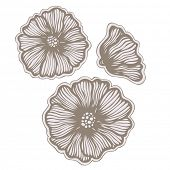 hand drawn flowers, vector