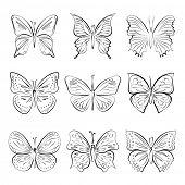 set of vector hand drawn butterflies