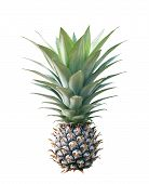 Isolated Pineapple ( Ananas Comosus ) On White With Clipping Path , Tropical Fruit poster