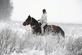 Girl Goes Horseback On The Park Brought By Snow