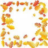 Oak, Maple, Wild Ash Rowan Leaves Vector, Autumn Foliage On White Background. Red Gold Yellow Rowan  poster