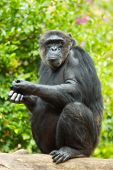 image of zoo animals  - A photo of a monkey in zoo - JPG