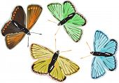 illustration with four different color butterflies isolated on white background