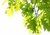 folhas de Maple no Parque
