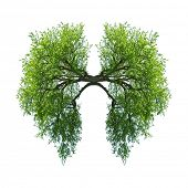 stock photo of bronchus  - green tree lungs isolated on white - JPG