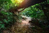 Path in a tropical forest