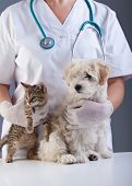 Animal doctor closeup with pets - a kitten and a small dog