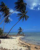 foto of west indies  - Pigeon Point beach Tobago Trinidad  - JPG