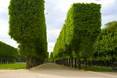 Trees In The Luxembourg Garden