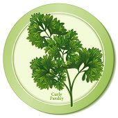 Curly Parsley Herb Icon