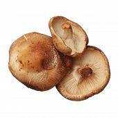 Shitake Mushrooms Isolated On White Background, Close Up