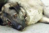 Sad stray dog