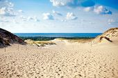Grey Dunes At The Curonian Spit