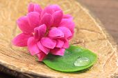 Flower And Leaf In Spa