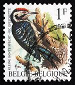 Postage Stamp Belgium 1990 Lesser Spotted Woodpecker, Bird