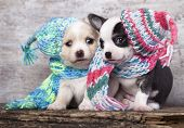 puppy wearing a knit hat