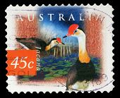 AUSTRALIA - CIRCA 1997: a stamp printed in the Australia shows Comb-crested Jacana, Irediparra Galli