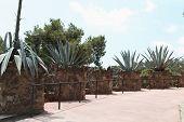 foto of gaudi barcelona  - Cactus close - JPG