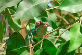 Relaxed Chameleon