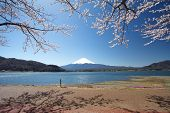 picture of mount fuji  - Mountain Fuji in spring  - JPG
