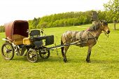 foto of carriage horse  - Brown horse with retro carriage on green field forest and windmill behind - JPG
