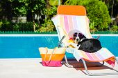 stock photo of rest-in-peace  - Funny dog resting on a deck chair and wearing sunglasses on summer vacation at swimming pool. ** Note: Shallow depth of field ** Note: Visible grain at 100%, best at smaller size - JPG