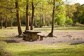 Picnic Area In Abbots Wood, East Sussex, England