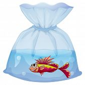 Illustration of a plastic pouch with a fish on a white background