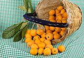 stock photo of loquat  - A traditional harvesting basket full of freshly picked loquats - JPG