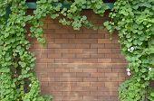 Ivy Bush On Brick Wall Background