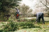 stock photo of man chainsaw  - Professional gardeners pruning trees in the garden - JPG
