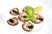 stock photo of escargot  - Edible snails  - JPG