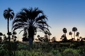 stock photo of mesopotamia  - Sunrise on El Palmar National Park  - JPG