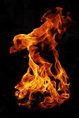 picture of bonfire  - Fire flames of night bonfire on outdoors - JPG