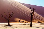 Beautiful Landscape Of Hidden Vlei In Namib Desert