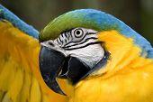 Macaw stretching