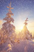 Christmas landscape. Winter forest with snow-covered trees. Beautiful light at sunset