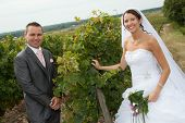 Wedding In The Vineyards