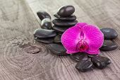 Moth Orchid And Black Stones On Weathered Deck