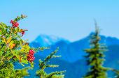 Fragment of Mount Seymour trail in Vancouver, Canada.