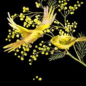 foto of mimosa  - Sprig of Mimosa and Yellow Bird - JPG