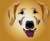 focinho de cão