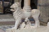 Lion In The City Of Bergamo, Lombardy, Italy